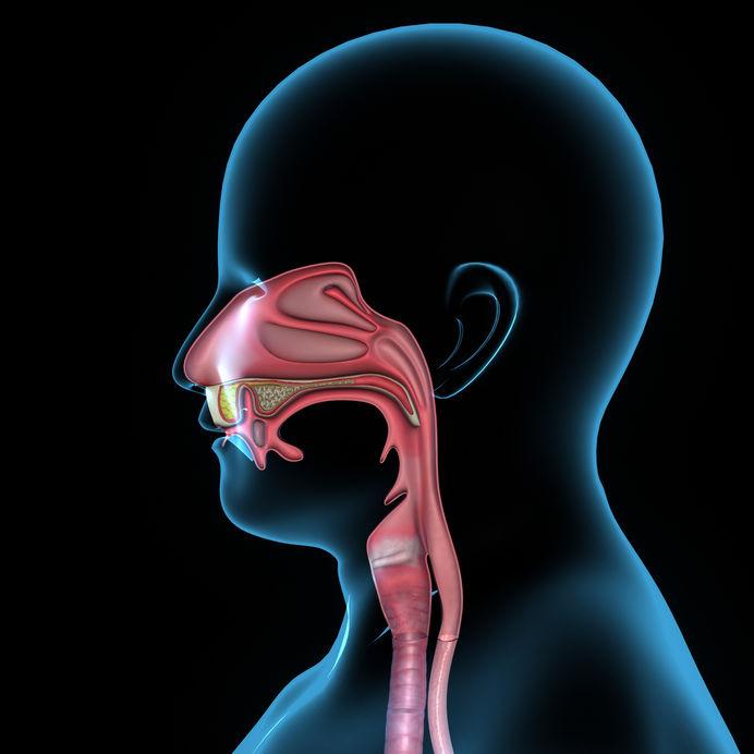 Human Airway